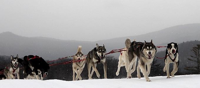 valley-snow-dogs.jpg