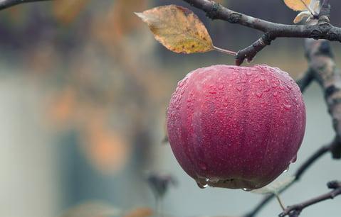 apple-picking-nh.jpeg