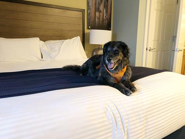 Pet Friendly Real Estate