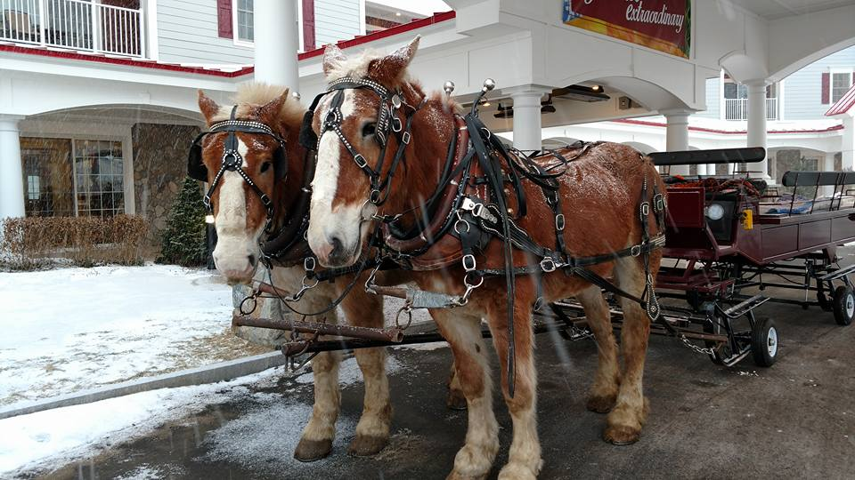 Riverwalk-horse-sleigh-ride.jpg