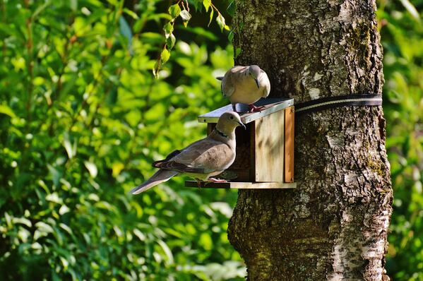 animal-aviary-bird-house-162943