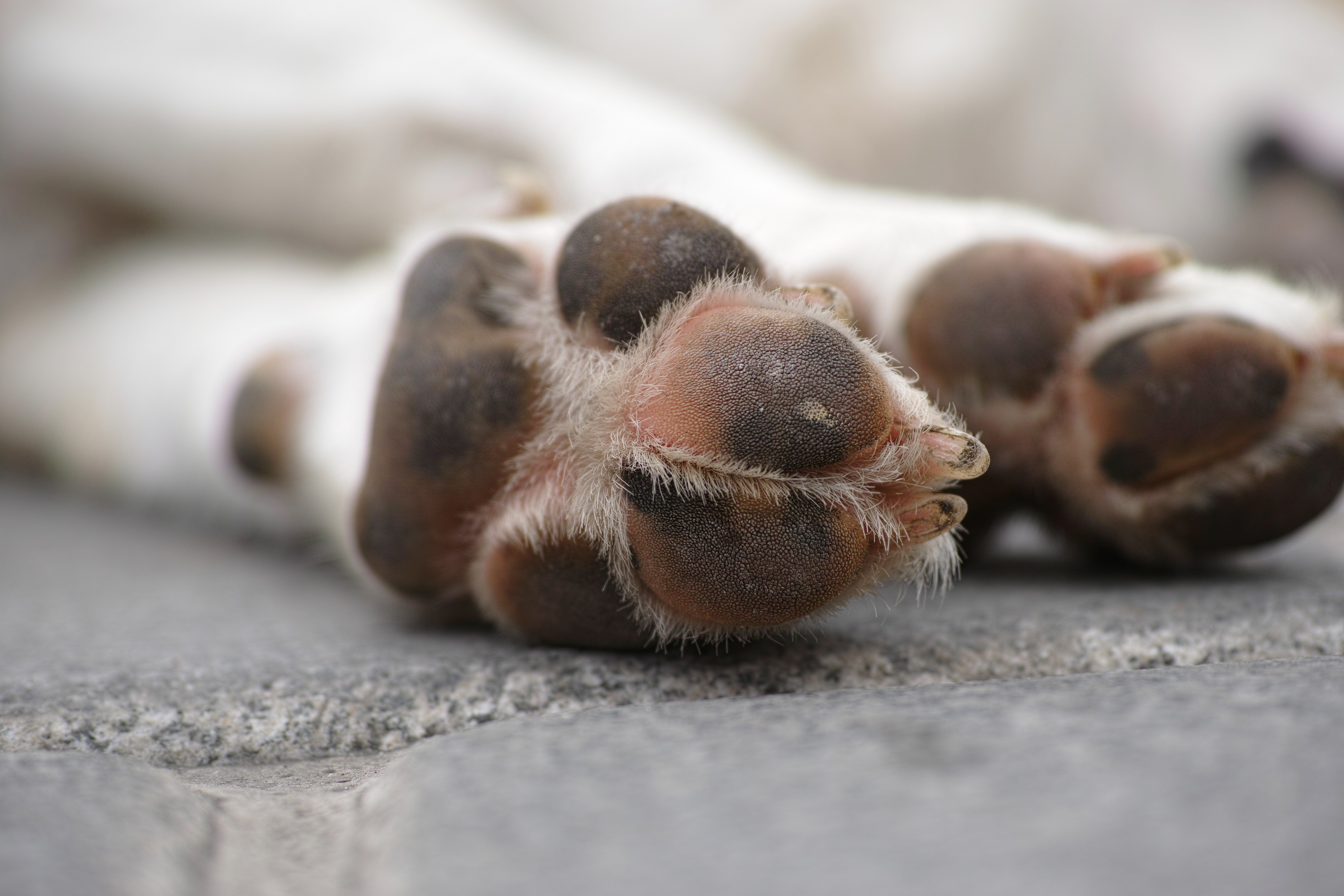 winter dog paws