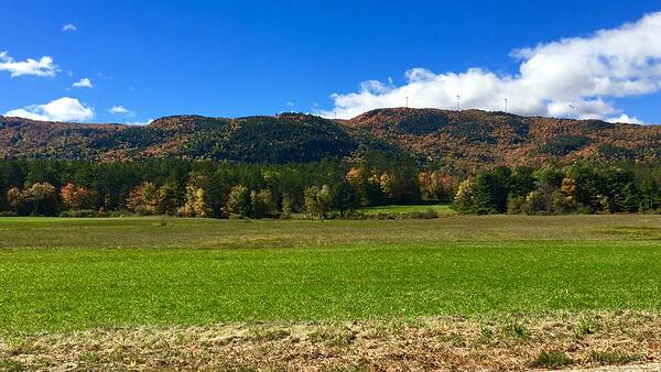 foliage Tenney Mt