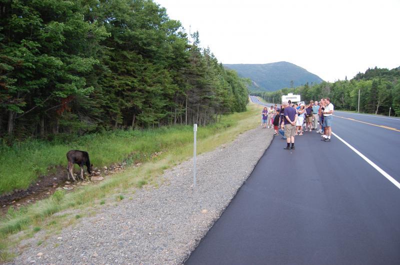 pemi-valley-moose